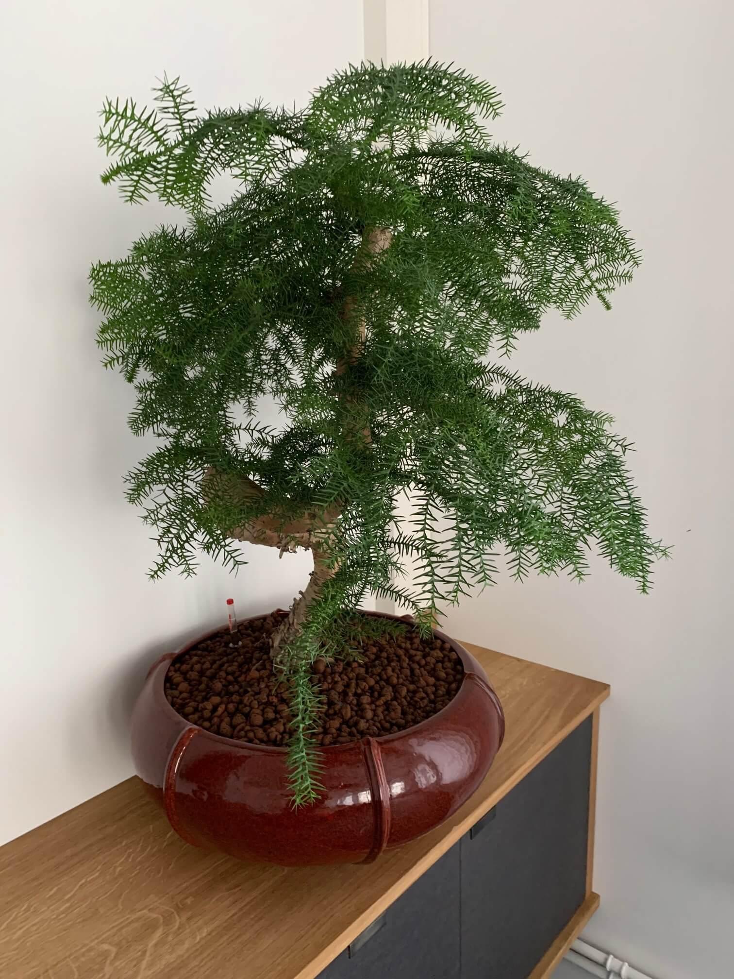 coupe-plante-naturelle-20