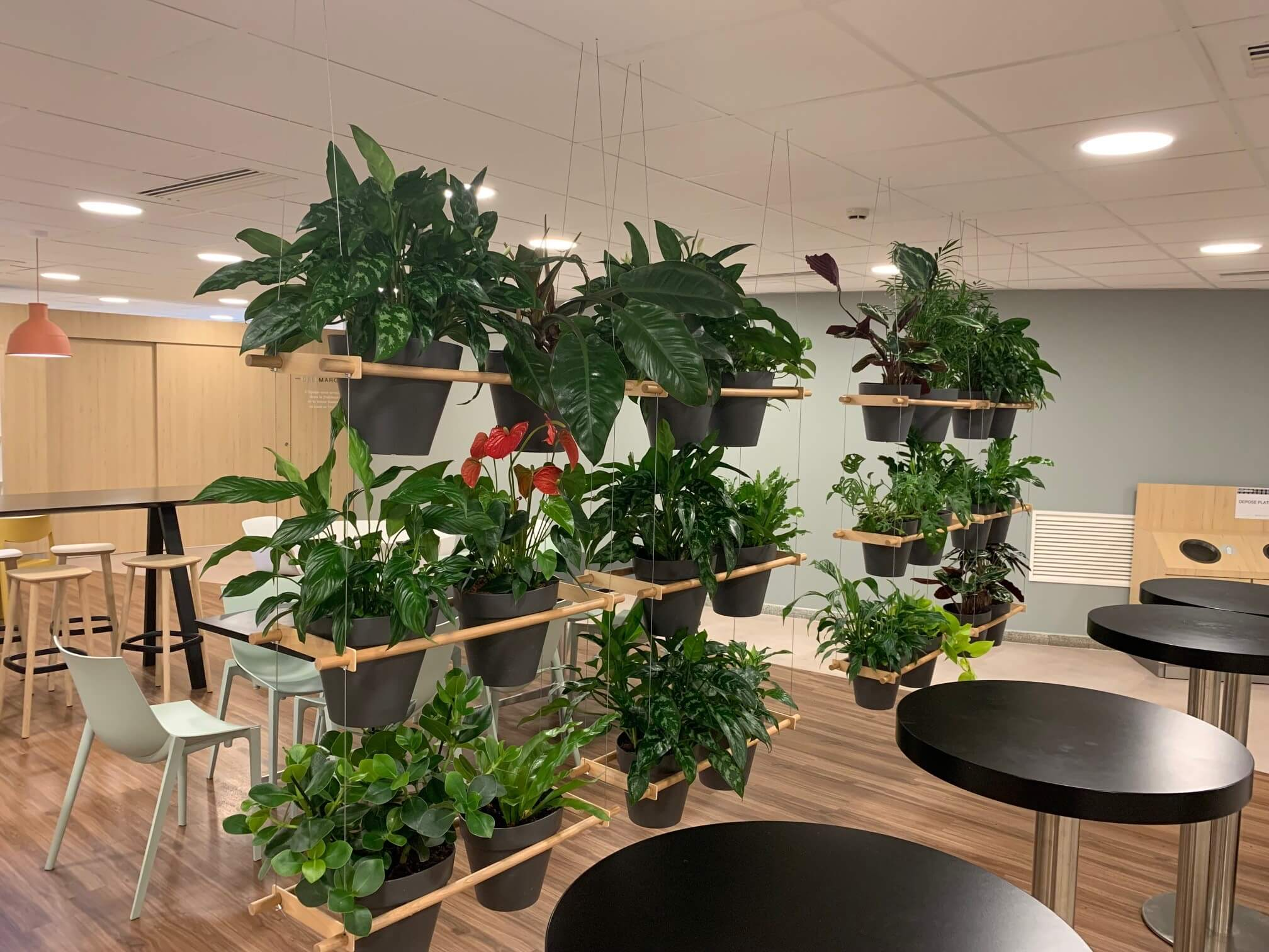 plantes-vertes-naturelles-20