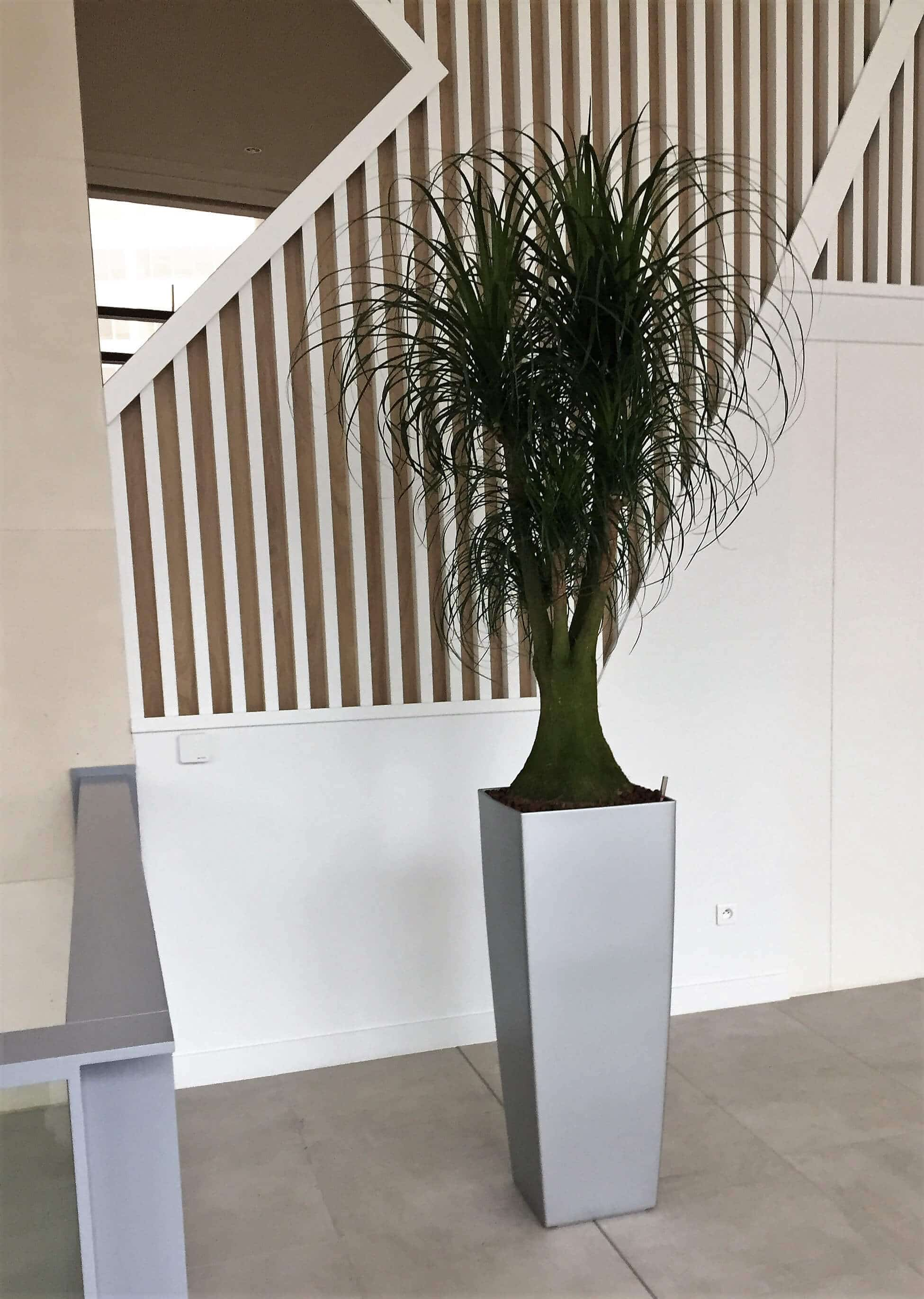 plantes-vertes-naturelles-202