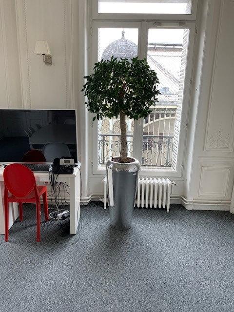 plantes-vertes-naturelles-203