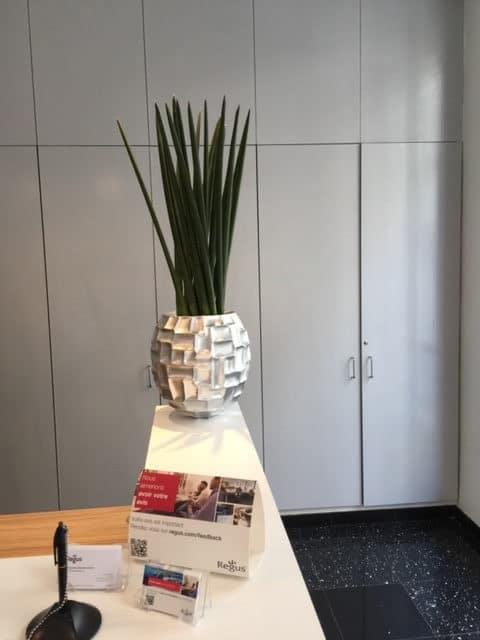 plantes-vertes-naturelles-204