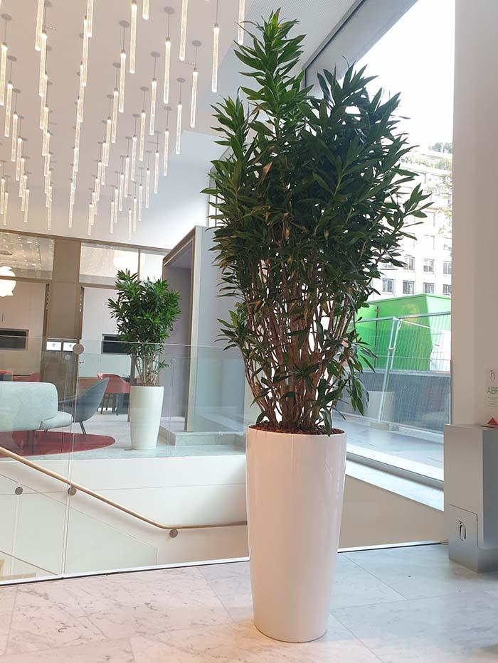 plantes-naturelles-decoplante-4