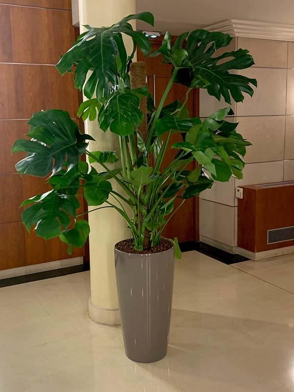 plantes-naturelles-decoplante-6