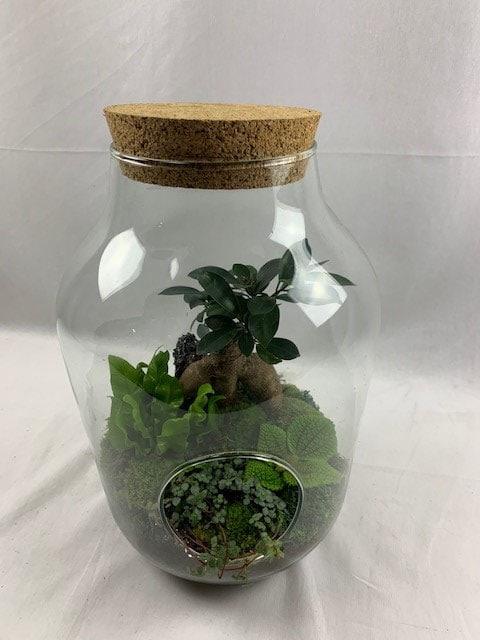 terrarium-decoplante-2