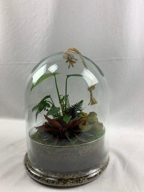 terrarium-decoplante